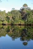 Litorale dei terreni paludosi della Florida Fotografia Stock