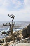 Litorale del nord della California Fotografie Stock