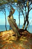 Litorale della foresta Fotografie Stock