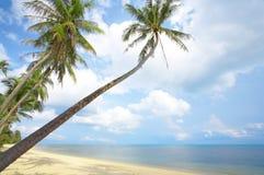Litorale della palma Fotografia Stock
