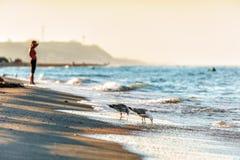 Litorale della spiaggia sabbiosa alla costa di Mar Nero con l'acqua potabile dei gabbiani al tramonto dalla località di soggiorno fotografia stock