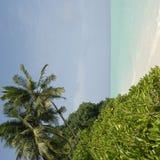 Litorale delle Maldive dell'isola Fotografia Stock