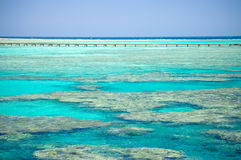 Litorale di corallo del Mar Rosso Fotografia Stock