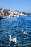 Litorale di Lucerna del lago con i cigni bianchi e le barche facenti un giro turistico al pilastro, Svizzera immagine stock