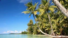 Litorale di mare tropicale archivi video
