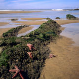 Litorale e litorale dell'Oregon Fotografie Stock
