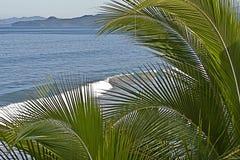 Litorale messicano dell'Oceano Pacifico con le palme fotografia stock