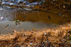 Litorale sabbioso di Adirondack coperto negli aghi del pino Fotografie Stock Libere da Diritti