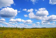 Litouws moeras Stock Fotografie