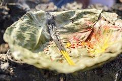 Litrökelse på indisk ferie, tänd rökelse på indisk ferie, Nepal, Katmandu arkivbild
