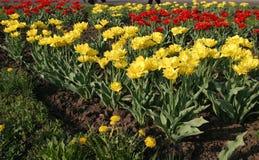 Lits de fleur image stock