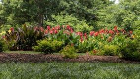 Lits de fleur de lis de Rose et de Canna chez Dallas Arboretum image libre de droits