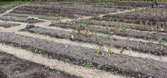 Lits de tulipes en été Photo libre de droits