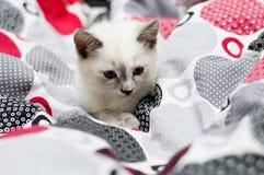 Lits plissés par chaton Images stock