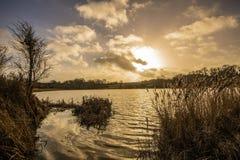 Lits tubulaires d'or au lac Pebsham dans la vallée hiver-inondée de Combe, près de Bexhill à East Sussex, l'Angleterre image stock