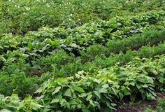 Lits végétaux avec des usines Photo stock