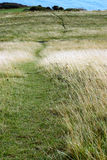 Litte footpath. Little footpath beetwen bushes.sumertime Royalty Free Stock Image