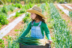 Litte kid farmer girl in onion harvest orchard Stock Images