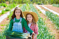 Litte kid farmer girls in onion harvest orchard Stock Photos