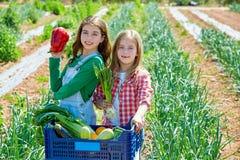 Litte kid farmer girls in vegetables harvest stock image