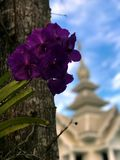 Litte-Orchidee und der Baum Lizenzfreies Stockbild