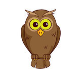 Litte owl Royalty Free Stock Images