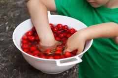 Litte ungar som äter körsbäret från bunken Arkivbilder