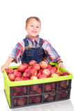 Littel farmer with apples Royalty Free Stock Photo