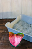 Litter box filled with litter sand with the anthurium - nice smell concept. Stock Photo
