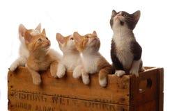 Litter of kittens Stock Photography