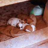 Litter of puppies. Litter of puppies slept on a hessian outside of the house Stock Photos
