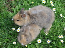 Litter of rabbits stock photo
