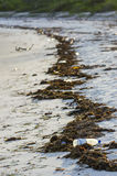Litter on the shore Royalty Free Stock Image