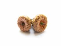 Little acorns Stock Images