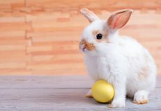 Little adorable bunny rabbit with yellow easter egg stay on gray table with brown wood pattern as background stock photo