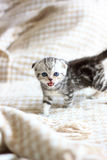 Little kitten crying meow Stock Photos