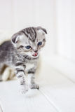 Little kitten crying meow Royalty Free Stock Photos