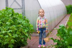 Little adorable girl with the basket of harvest in a greenhouse royalty free stock photography