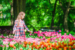 Little adorable girl in blooming tulips garden. Little beautiful girl in lush tulips garden at warm spring day Stock Image