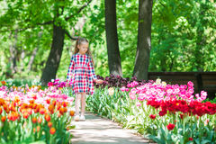 Little adorable girl in blooming tulips garden. Warm spring day outdoors Stock Image