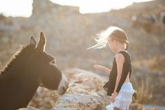 Little adorable girl with donkey on Mykonos. Little girl stroking donkey in the green field stock photos
