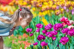 Little adorable girl smelling colorful tulips at Royalty Free Stock Images