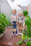 Little adorable girls with the basket of harvest in a greenhouse stock photo