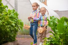Little adorable girls with the basket of harvest near greenhouse royalty free stock image