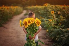 Little adorable kid boy holding bouquet of sunflowers in summer day. Child giving flowers. Little adorable kid boy holding bouquet of sunflowers in summer day royalty free stock images