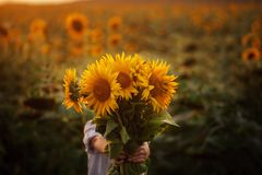 Little adorable kid boy holding bouquet of sunflowers in summer day. Child giving flowers. Little adorable kid boy holding bouquet of sunflowers in summer day stock photo