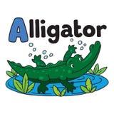 Little alligator or crocodile, ABC. Alphabet A. Children  illustration of little funny alligator or crocodile swims in the lake. Alphabet A Stock Photo