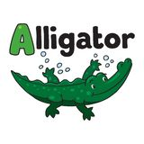 Little alligator or crocodile, ABC. Alphabet A. Children vector illustration of little funny alligator or crocodile swims in the lake. Alphabet A Stock Image