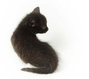 Little amusing black kitty Royalty Free Stock Images