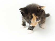 Little amusing spotty kitten Royalty Free Stock Images